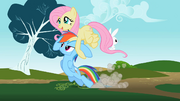 Rainbow Dash being dragged by Fluttershy S2E07.png