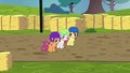 Cutie Mark Crusaders near the finish line S6E14.png
