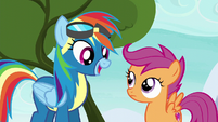 "Rainbow Dash ""right before the finale"" S6E7"