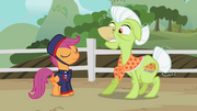 Telegram Scootaloo & Granny Smith S2E12.png