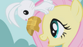 Angel holds the tickets in front of Fluttershy S1E03.png