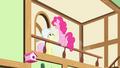 Pinkie Pie 'singing in front of everypony!' S4E14.png