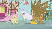Gilda roaring at Fluttershy S1E5.png