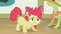 Apple Bloom has a messy mane S2E12.png