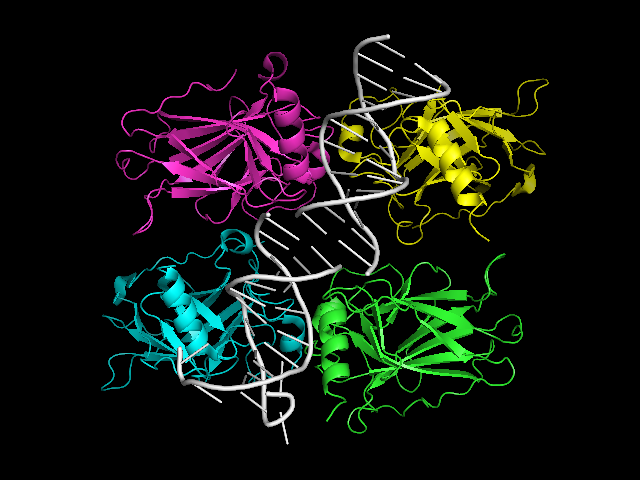 File:P53 structure.png