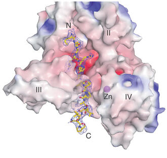 Anthrax Lethal Factor Tertiary Structure