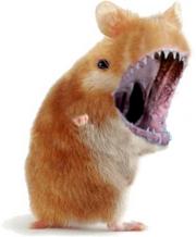 Killer hamster by palmovish