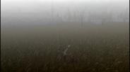 MHF1-Swamp Screenshot 024