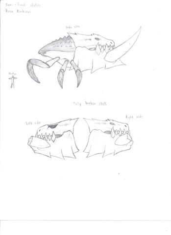File:Ronin Karkinos Sketch -2 001.jpg