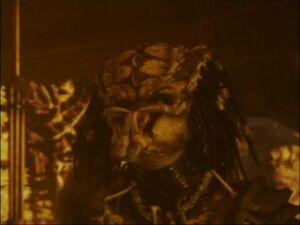 Predator2disc233