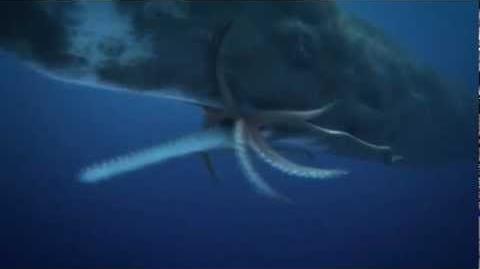 "COLOSSAL SQUID (giant squid ) Vs. SPERM WHALE ""EPIC BATTLE"""