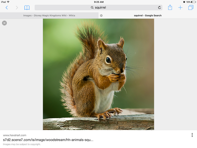 File:Is it a squirrel.png