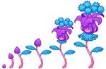 Jolly Flowers growth