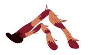Katsuma Tarantula Left Arm
