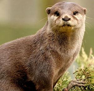 File:Otter2.jpg