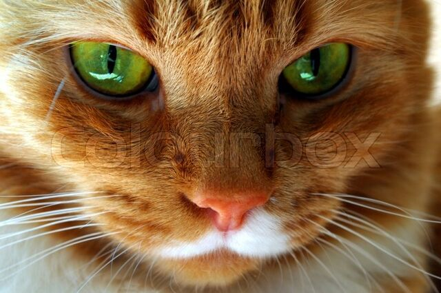 File:1965024-red-cat-with-green-eyes.jpg