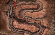 Dust Devil track map