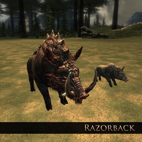 File:Razorback 1.jpg