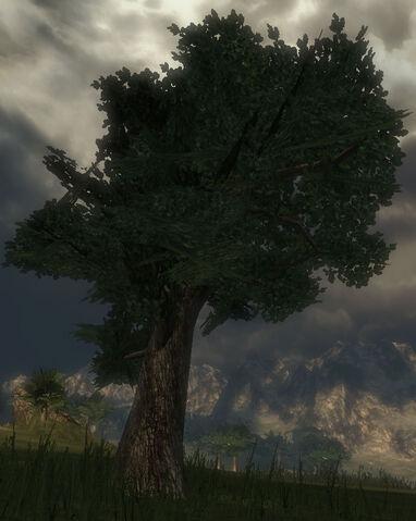 File:Greywood Tree.jpg