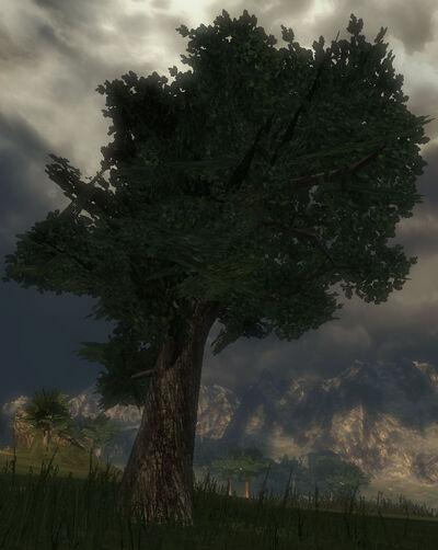 Greywood Tree