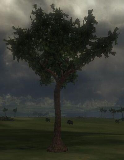 Whitewood Tree