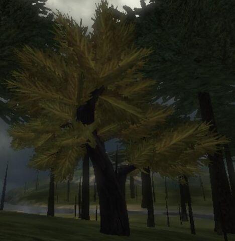 File:Blackwood Tree.jpg