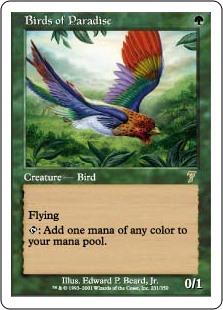 Birds of Paradise 7E