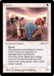 Camel AN