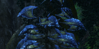 Pyrra Tree