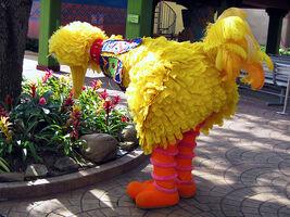Busch gardens tampa bay safari big bird
