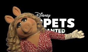 Piggy glamour