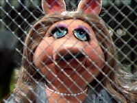 PiggyStache