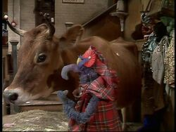 Cow&gonzo