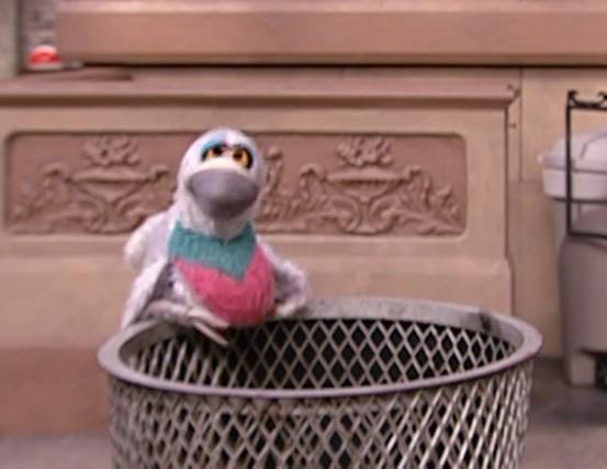 File:Pigeon.jpg