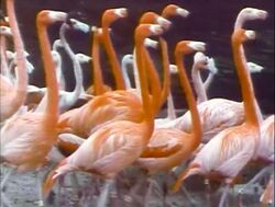 Film.Flamingos