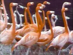 Film.Flamingos
