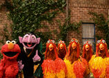 Elmo-the-count-chickens