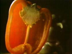 Pepperzoomout