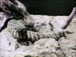 1272-Snake