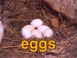 Film.Eggs