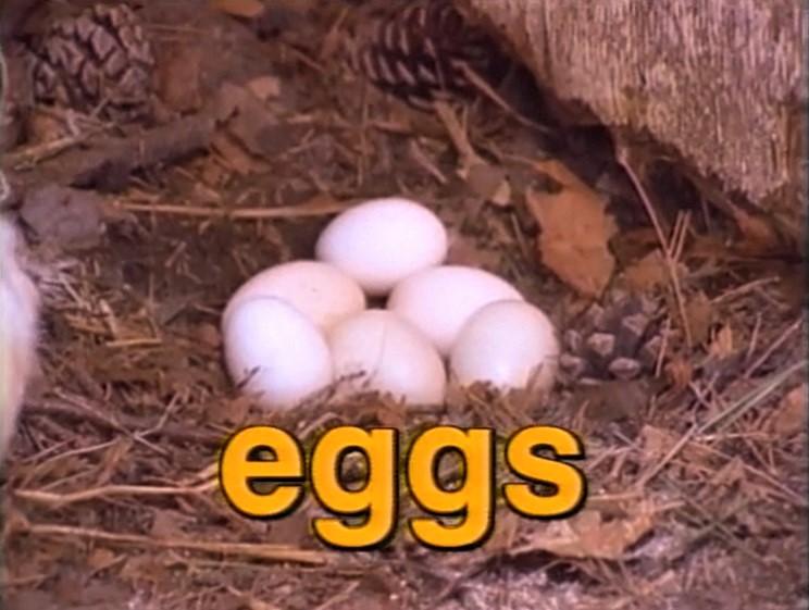File:Film.Eggs.jpg