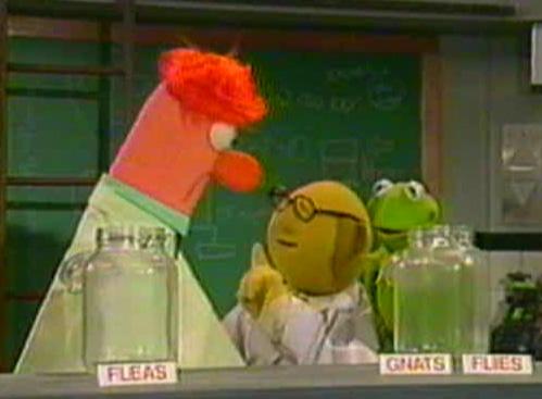 File:Beaker flat muppet madness.jpg