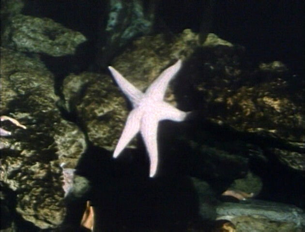 File:Starfishrefilmed.jpg