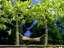 CarolDebbie-Trees