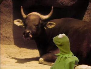 Kermitlecture--Horns