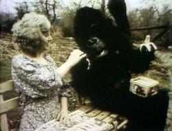 GorillaPark-YES