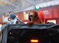 TheMuppets-WorldPremiere-ElCapitan-(2011-11-12)-16