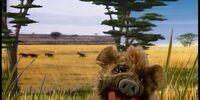 The Hyena Song