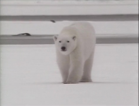 File:Song.Polarbear.jpg