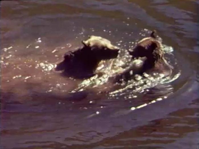 File:1755.bears.jpg